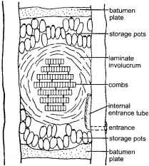 Food Stored Stem Diagram