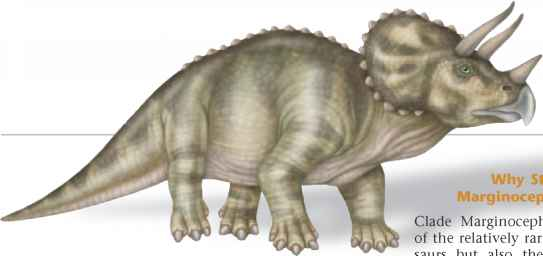 Marginocephalians Dinosaurs Images