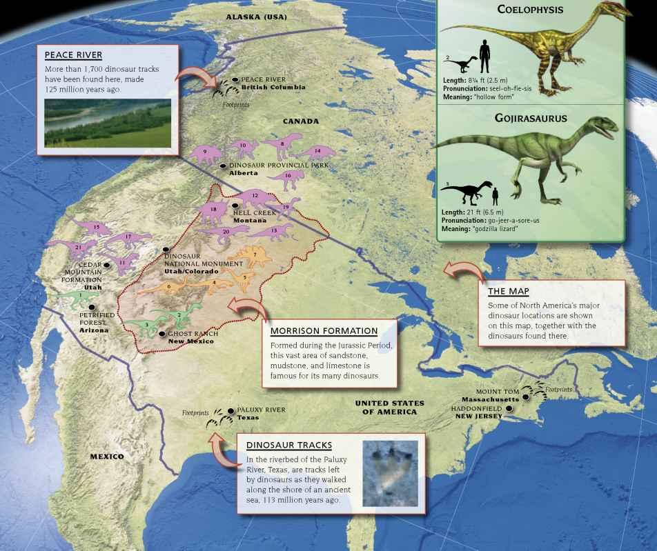 North America   Dinosaur Resources   Fossil Hunters