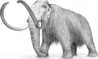 The Mammuthus Columbi