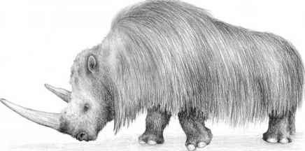 Woolly Rhinoceros Images