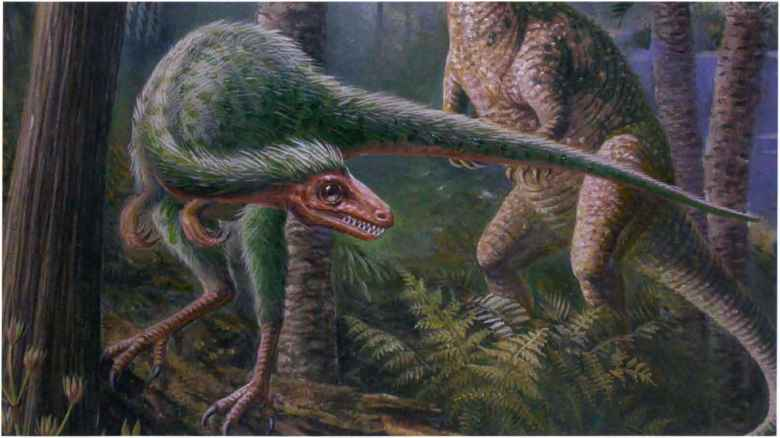 the purpose of feathers in non avian dinosaurs It was the first non-avian dinosaur found with feather-like structures, providing further evidence for the link between dinosaurs and birds although it is widely accepted that a small group of theropod dinosaurs gave rise to birds, finding feathered dinosaurs in the fossil record that predate the earliest.