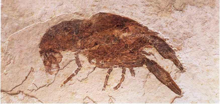 Fosili 1396_7_82