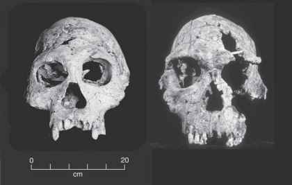 Fossil Record Peking Man