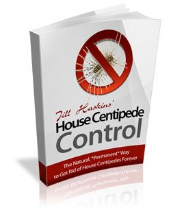 Get Rid Of House Centipedes