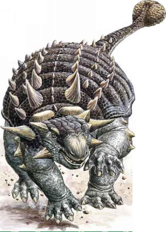 Ankylosaurus Defence Pictures