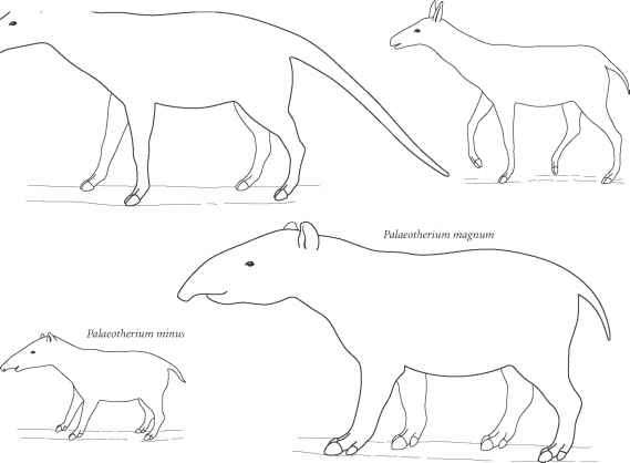 Oviraptor Outlines