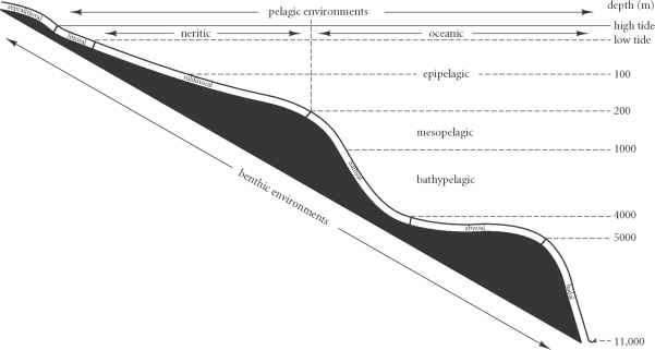 Survivorship Curve Fossil