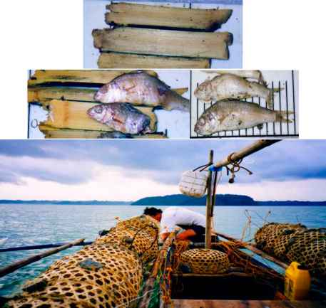 Fish Trap The Philippines