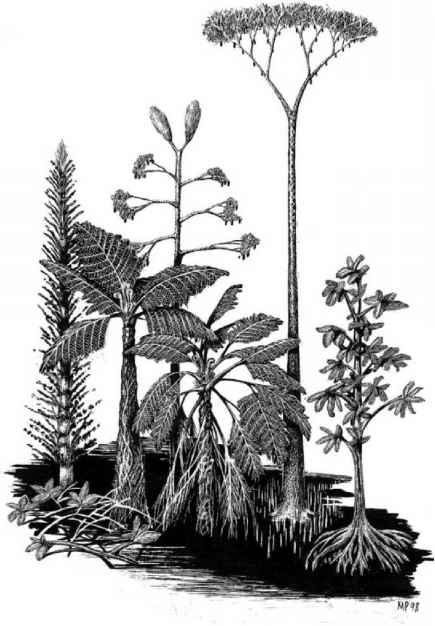 Carboniferous Plants Drawing