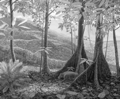 Palaeocene Vegetation