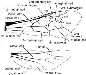 Diagram Bee Vein