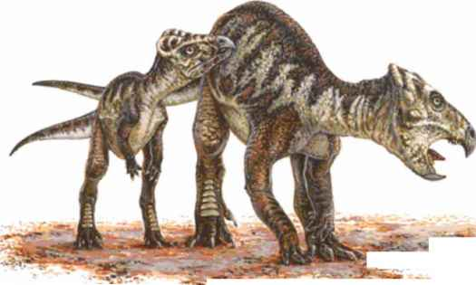 Feathered Ceratopsian