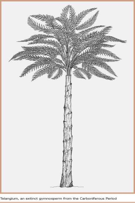 Palm Trees Sketch