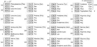 The Universal Genetic Code Table