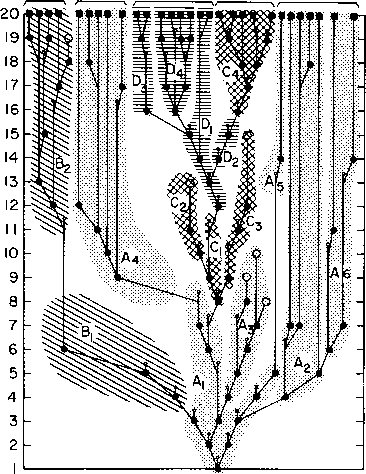caminalcules phylogenetic tree