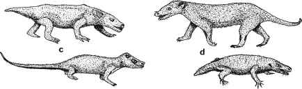 Cynodont Therapsids