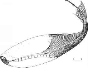 Haikouichthys Images