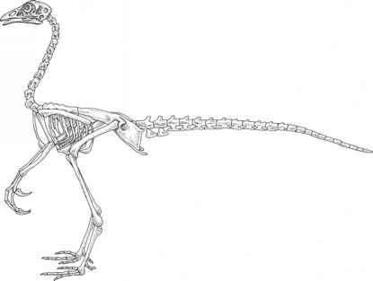 Chickenosaurus Skeleton