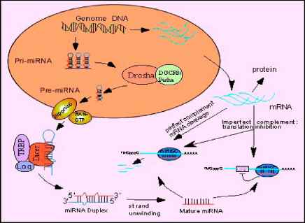 Cell Differentiation Factors